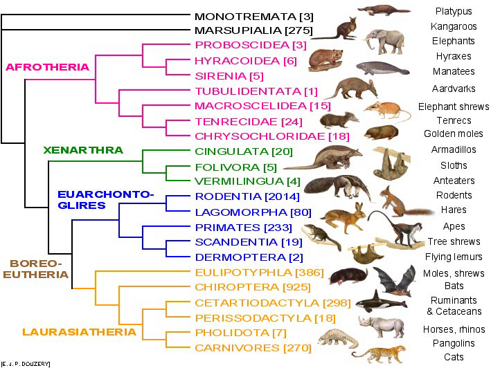 an analysis of a group of mammals the primates A mammal of the order primates, which includes the anthropoids and prosimians, characterized by refined development of the hands and feet, a shortened snout, and a large brain show more.
