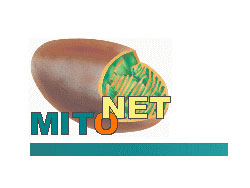 Mitonetwork of Diagnostics &  Therapy